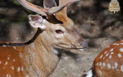 Zoo des Marécottes : sortie en famille – Papa conseil