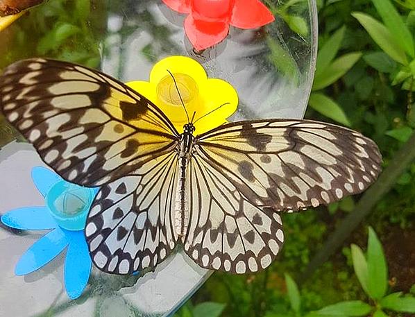 Papiliorama : sortie en famille – Papa conseil