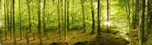 forêt gérée durablement haba